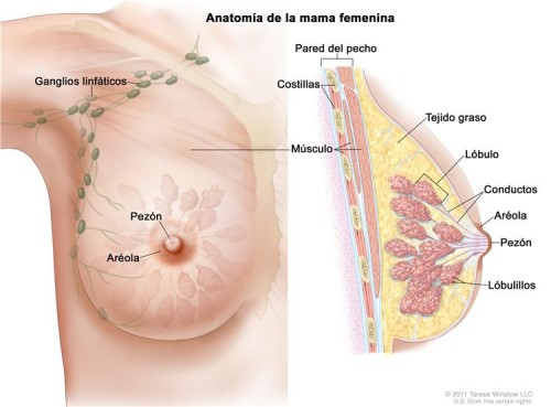 Breast cancer, Breast cancer surgery, Breast cancer treatment