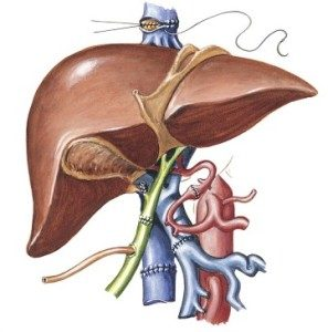 Liver Transplant surgery, treatment, procedure
