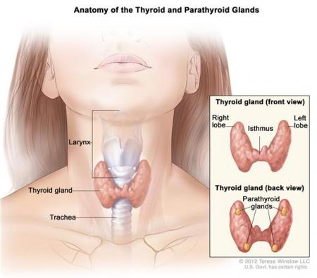 Thyroid cancer surgery, treatment